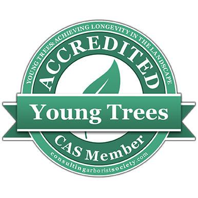 young-tree-new